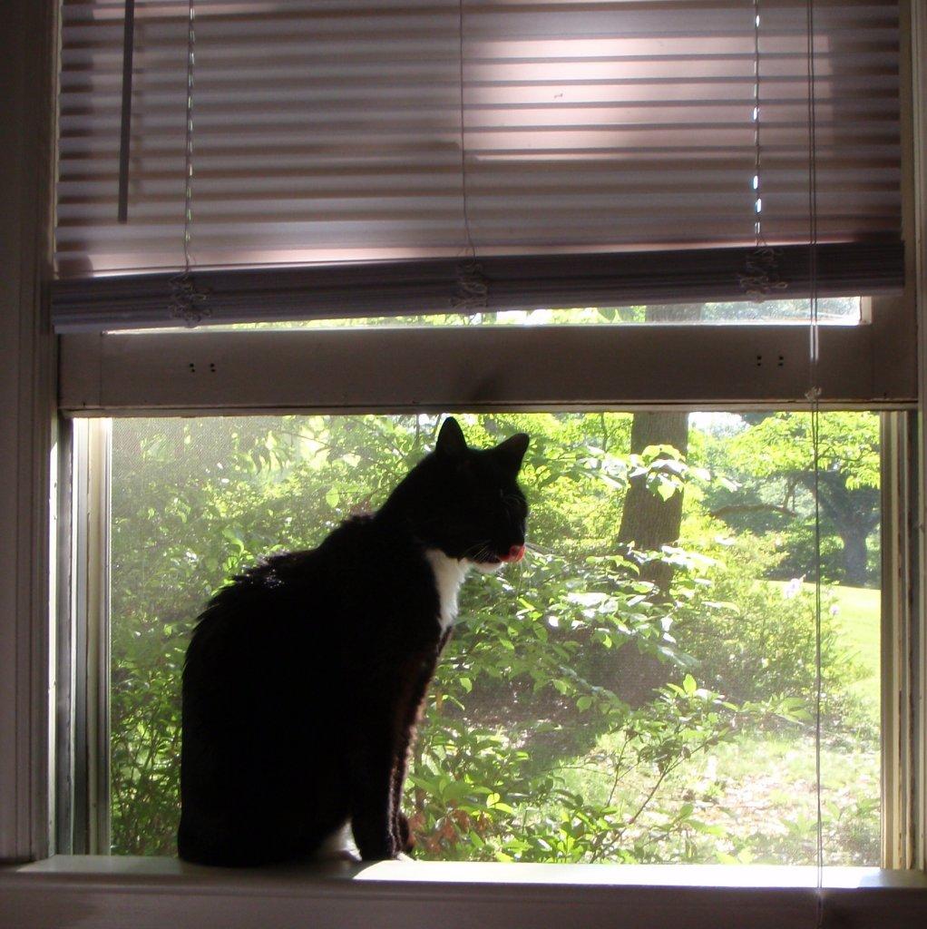 verh ngnisvoller instinkt offene fenster k nnen f r katzen lebensgef hrlich sein katze du. Black Bedroom Furniture Sets. Home Design Ideas