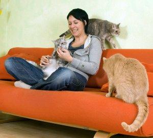 der mehrkatzenhaushalt katze du. Black Bedroom Furniture Sets. Home Design Ideas